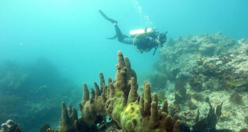tipsfro-divers