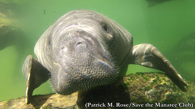 Patrick M Rose_ Save the Manatee Club